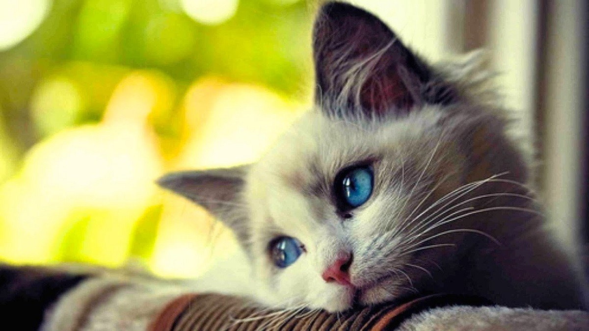 Gatos Bonitos para Blog